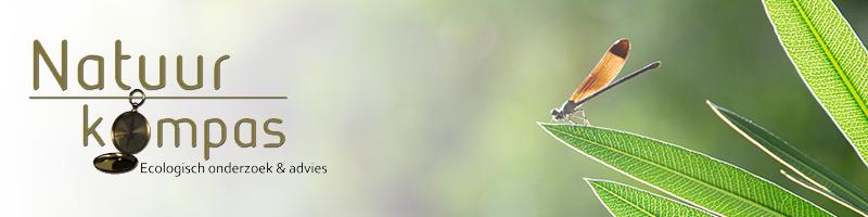 vleermuisonderzoek